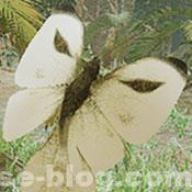 イッタンモンシロ - モンハンRISE環境生物 - MHRISE
