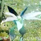 大翔蟲 - モンハンRISE環境生物 - MHRISE